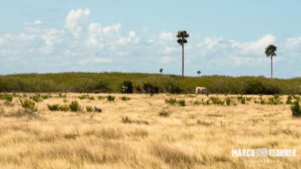Rundreise-Kuba-Reisebericht-Camagueey-Playa-Santa-Lucia-6